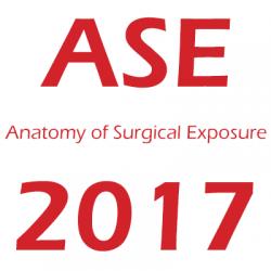 Anatomy of Surgical Exposure
