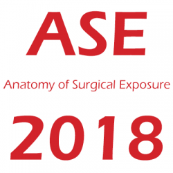 Anatomy of Surgical Exposure